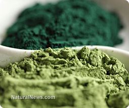 Spirulina may help elderly patients with anemia and immunological dysfunction | ageing | Scoop.it