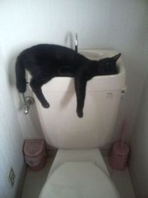 Cats sleeping in odd places Bored? Click here and... | Cats Rule the World | Scoop.it