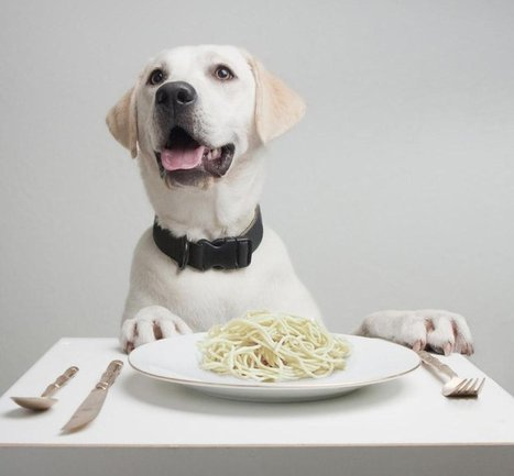 Dogs, Spaghetti, Spices and the Carnival's King Cakes | Animals Make Life Better | Scoop.it