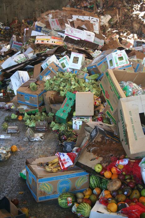 Le gâchis alimentaire mondial, sommes-nous tous coupables ? | Éducation en Haiti | Scoop.it