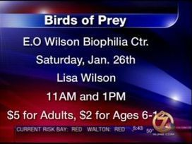 Birds of Prey at EO Wilson Biophilia Center - WJHG-TV | Ecophilia | Scoop.it