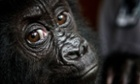 Can we afford to save species from extinction? | Conservation & Environment | Scoop.it