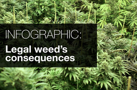 INFOGRAPHIC: Legal weed's consequences in Colorado | Drugs, Society, Human Rights & Justice | Scoop.it