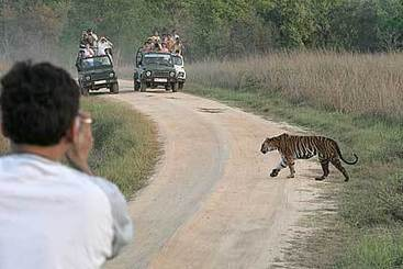 Essentials when exploring the wildlife at Kanha! | Holiday Resort Packages | Honeymoon Destination India | Scoop.it