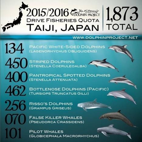 «Japan Dolphin Day» 2015 : dites NON au massacre des dauphins | Chronique d'un pays où il ne se passe rien... ou presque ! | Scoop.it