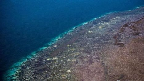 'Devastating' Great Barrier Reef bleaching worse than first thought | CCs Geography News | Scoop.it