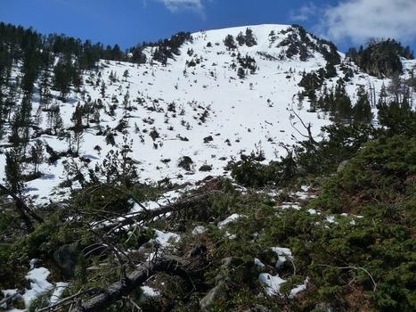 A propos de la grosse avalanche survenue cet hiver au Monpelat (1)|Le blog de Michel BESSONE | Vallée d'Aure - Pyrénées | Scoop.it