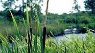 Congress to pour millions into Everglades | The Everglades Puzzle | Scoop.it
