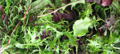 - | Toit végétalisés et agriculture | Scoop.it