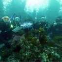 Is SCUBA Diving Eco-Friendly? | Indigo Scuba | Scoop.it
