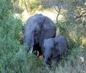 5 day Budget Kruger Tented Safari | Kruger Tours | Kruger & African Wildlife | Scoop.it