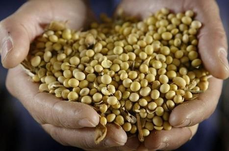 Les OGM sont-ils vraiment sans risque pour la santé et l'environnement? - La Croix   Le Fil @gricole   Scoop.it