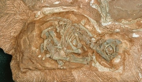 Dinosaur eggs get ready to hatch their secrets – 200 million years later | Virology News | Scoop.it