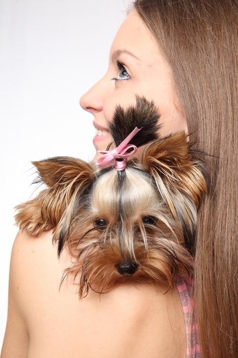 Une assurance santé pour votre animal - Mutuelle Remboursement | Seniors et santé | Scoop.it
