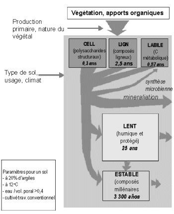 Dynamique du carbone organique dans les sols | Les fractions de la MO | Scoop.it