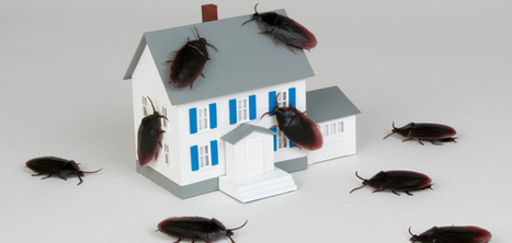 Pest Control Service In Des Moines, IA | Miller Pest & Termites | Miller Pest & Termites | Scoop.it