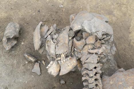 Nuevo episodio de violencia neolítica cerca de Estrasburgo | ArqueoNet | Centro de Estudios Artísticos Elba | Scoop.it