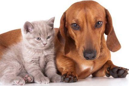 Animale domestico: cosa scegliere tra cane e gatto?   Bau Bau News - Amici a 4 Zampe   Scoop.it