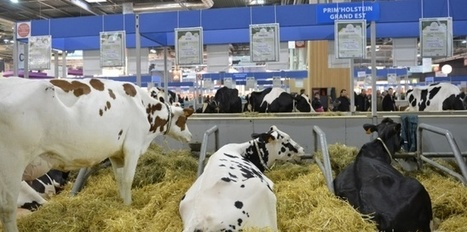 "Au salon de l'agriculture : ""En France, on mange de la bonne viande"" 
