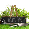 10 Must Have Herbs That Should Be in Every Kitchen