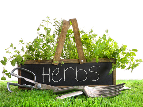 10 Must-Have Herbs That Should Be In Every Kitchen   Kitchen Chatters   10 Must Have Herbs That Should Be in Every Kitchen   Scoop.it