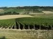 Balade Gourmande Chablis | Agenda du vin | Scoop.it