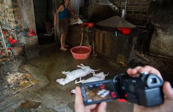 Pro-Animals: Crim o cultura? | Notícies d'actualitat | Scoop.it