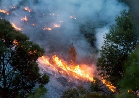 Delegates accused of 'fiddling' while the planet burns   GarryRogers Biosphere News   Scoop.it