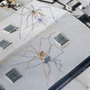Enormous Daddy Long-Legs Overtake the Seattle Center Armory | Colossal | The brain and illusions | Scoop.it