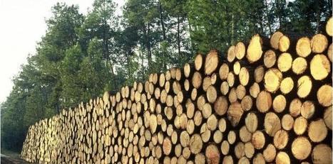 L'incroyable sous-exploitation de la richesse forestière en France | BIENVENUE EN AQUITAINE | Scoop.it