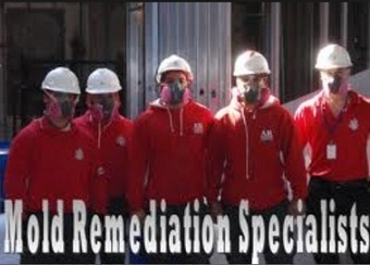 Mould Remediation Specialists – Trusted By Many For A Secure Environment   Mould Pro   Scoop.it
