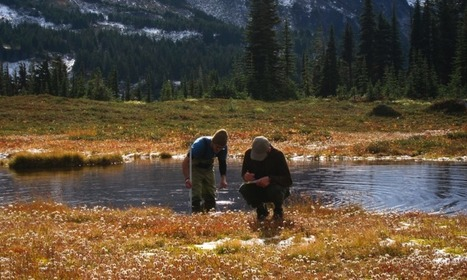Climate change could leave Pacific Northwest amphibians high and dry   GarryRogers NatCon News   Scoop.it