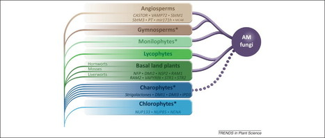 Evolution of the plant–microbe symbiotic 'toolkit' | Plant-Microbe Interactions | Scoop.it