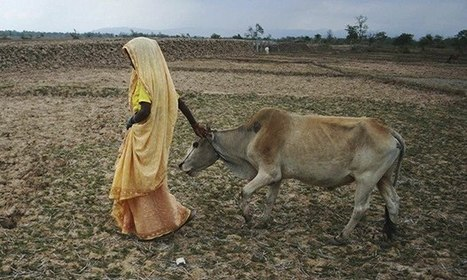 There's more to 'womenomics' than keeping cows in India | Development economics | Scoop.it