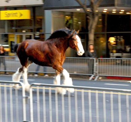Super Bowl Scoop: Hoof Boot Solves Budweiser Clydesdale Safety Concern | Media Relations Articles: Rob Ford | Scoop.it