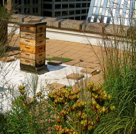 Cabinet of Curiosities: August 2009 | Pollinators: a plant focus, for backyards | Scoop.it