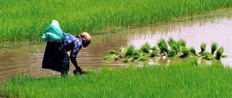 Trade and investment agreements block progress on agroecology and food sovereignty | Questions de développement ... | Scoop.it