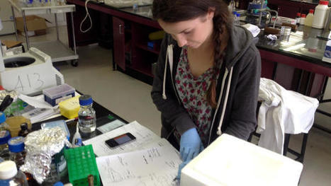 Biocoding For Beginners   Synthetic Biology   Scoop.it