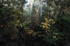 Brésil: déboisements en hausse au cours des douze derniers mois en Amazonie | Biodiversité NC | Scoop.it