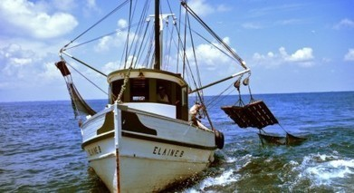 Scientists: diverse catches better for fishery ecosystems | OUR OCEANS NEED US | Scoop.it