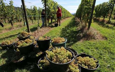 En Béarn, quand l'union fait la force contre le chômage | Agriculture en Pyrénées-Atlantiques | Scoop.it