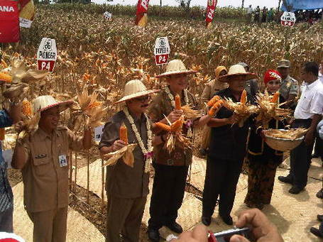 Increase Corn Production, Government No Need to Import | DuPont ASEAN | Scoop.it
