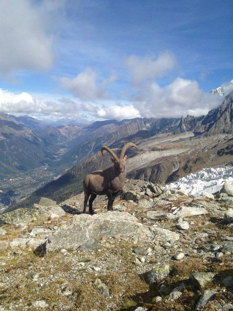 Top 3 Things to Do at Chamonix Mont Blanc - Go Backpacking | Winter | Scoop.it