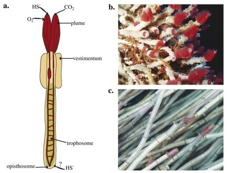 Species Concepts - Scientific American (blog)   Middle School Life Science   Scoop.it