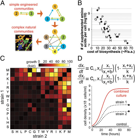 PNAS: Syntrophic exchange in synthetic microbial communities | Interspecies signaling | Scoop.it