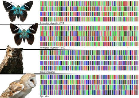 DNA barcoding of life - get all species on earth indexed   Amazing Science   Scoop.it