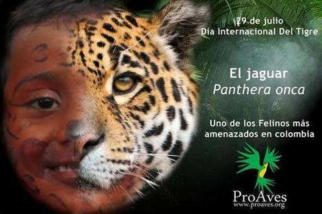 ProAves Colombia on Twitter | Agua | Scoop.it