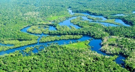 Keeping Amazon fish connected is key to their conservation | Rainforest EXPLORER:  News & Notes | Scoop.it