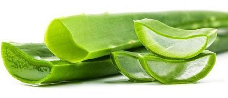 Aloe Vera – The Magic Plant! | Aloe Vera Juice | Scoop.it