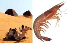 Algeria - New Shrimp Farming Project in Sahara Desert, S. Korea technical leader... | Aquaculture (Global Aqua Link) | Scoop.it
